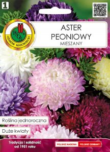 Aster peoniowy mieszany front
