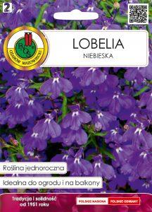 Lobelia niebieska front