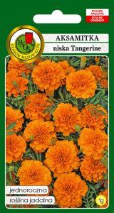 Aksamitka pełna niska tangerine pomarańczowa front