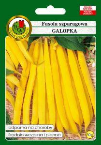 Fasola szparagowa żółta karłowa Galopka front
