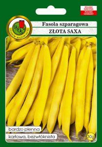 Fasola szparagowa żółta karłowa Złota Saxa front