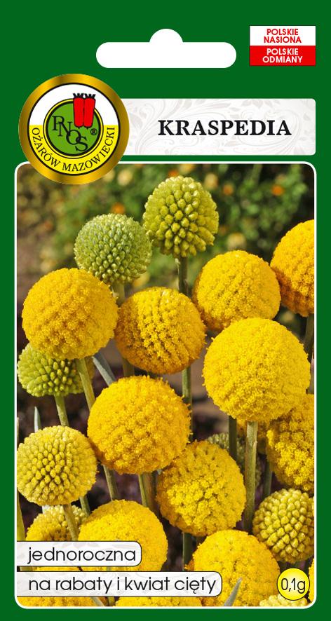 5904232137303 kraspedia żółta front