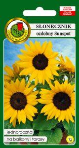5904232244629 słonecznik ozdobny sunspot niski żółty front