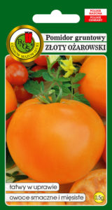 pomidor_pnos_zloty_ozarowski
