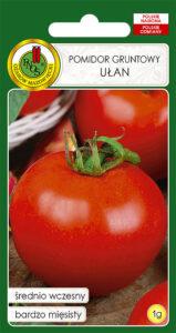 Pomidor Ułan - nasiona PNOS